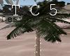 Palm & lights