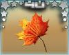 Falling Fall Oak Leaves