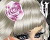 BLUSH Hair Rose