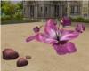 LSM Magic dancing Orchid