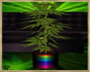 ~H~420 Plant