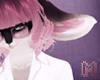 🅜 ROI: ear 6