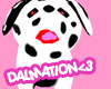 Adorable Dalmation