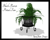 Black Raven Potted Fern