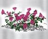 MANDYS PINK ROSE BUSH  5