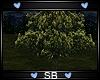 *SB* Tree V2