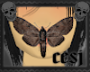 mm moth