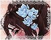 Hair Lilies |Blue