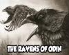 The Ravens Odin part 4