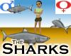 Sharks -v1b