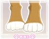 Fennec Feet