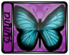 eCyn Papillon