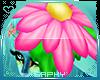 .S. Hanaki Flower