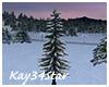 Winter Snowy Pine Tree
