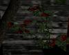 B Vines Roses