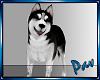 !P! Husky Pet Furniture.