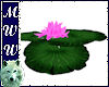 Floating Waterlily- Pink