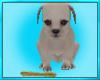 Cute Puppy Bone