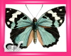 GS Group Of Butterflies