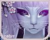 [c] Minerva Bundle