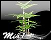 MIA1-Bamboo tree-
