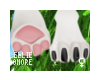 Shere - F Hind Paws
