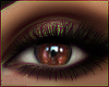 P►Contacts Brown