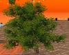 albero green2