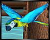 Tropicana Parrot Flying