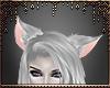 [Ry] Silver ears