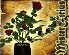 SC Rose Bush V2