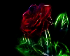 A Neon Rose