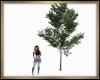 Garden Tree Derive