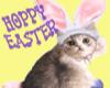 T76~Hoppy Easter bunycat