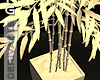 G®  Jap Bambo plant