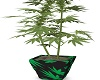 AS Weed Plant