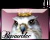 *R* Royal Owl Sticker