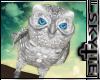 White Shoulder Owl [M/F