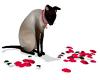 DIVA Cat II