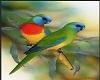 Parrot. A
