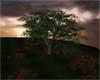 Loves Storm Tree