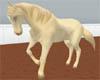 *Cremello Riding Horse