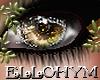 ~E- Fauna Eyes