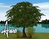Meadow Lake Trees Set