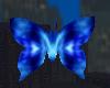 Blue Hell Butterfly
