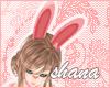 *SH* kawaii bunny ears