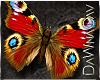 [DJ]Boho Butterfly Pets