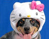 ~Oo Hello Kitty Dog