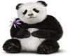 Pandie's Panda Kid Ride