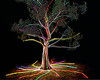 Neon Tree Photo room